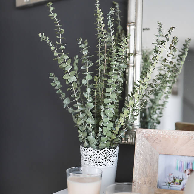 Baby Blue Eucalyptus Flower Delivery