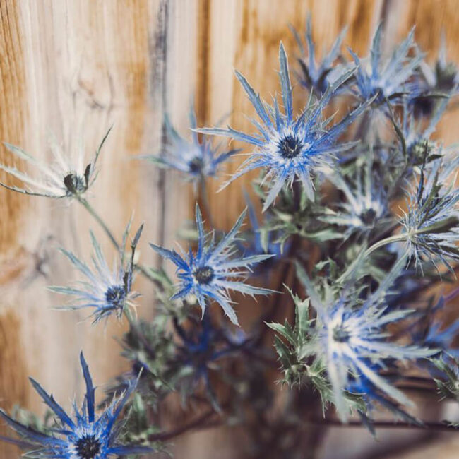 Eryngium Flower Delivery_Vancouver