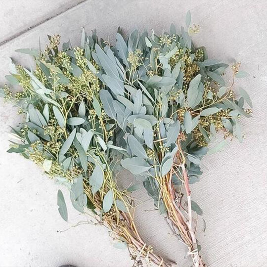 Eucalyptus Seeded Flower Delivery Canada