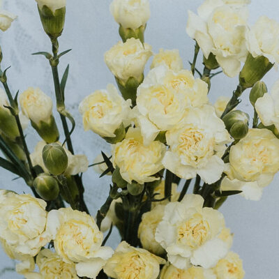 Pale Yellow Mini Carnations Flower Delivery