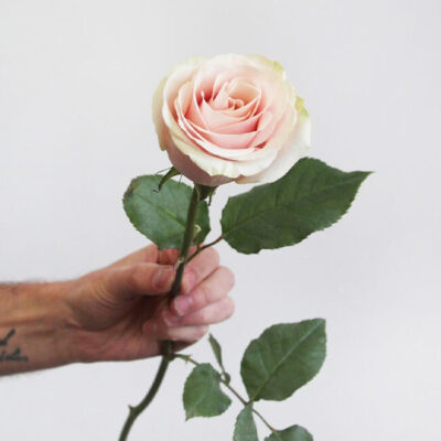 Peach Frutetto Roses Standard Flower Delivery Vancouver