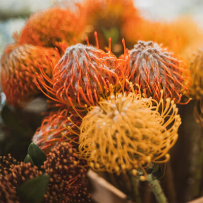 Pincushion Protea Flower Delivery
