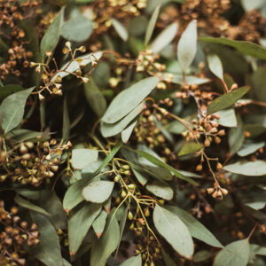 Seeded Eucalyptus Flower Delivery Vancouver