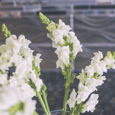 Snapdragons Flower Delivery_Canada