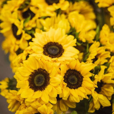 Sunflowers Flower Delivery