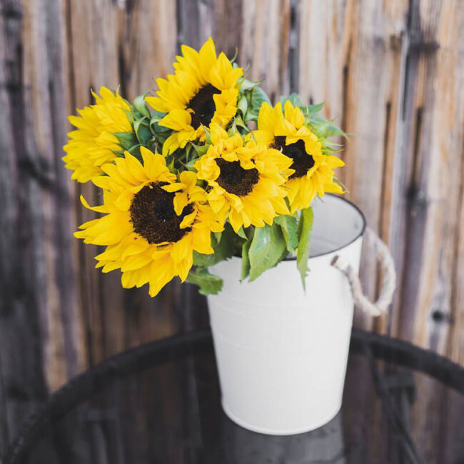 Sunflowers Flower Delivery Vancouver