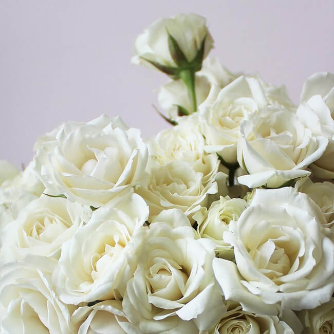 White Roses Spray Flower Delivery