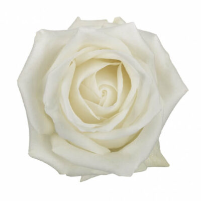 White Roses Standard Flower Delivery Vancouver