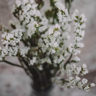White Statice Flower Delivery Near Me