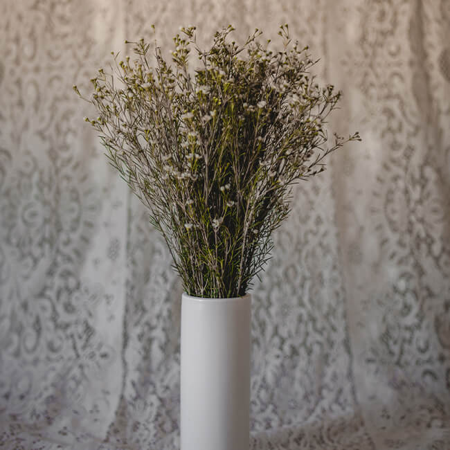 White Waxflower Flower Delivery