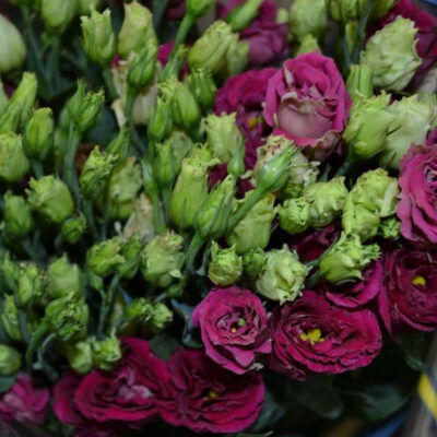 dark red lisianthus Flower Delivery Vancouver