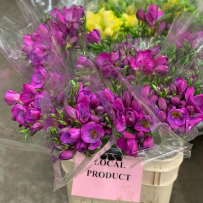 purple freesia Flower Delivery Vancouver