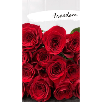 red freedom rose