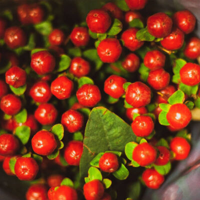 red hypericum Flower Delivery Vancouver