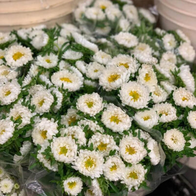 white aster matsumoto Flower Delivery Vancouver