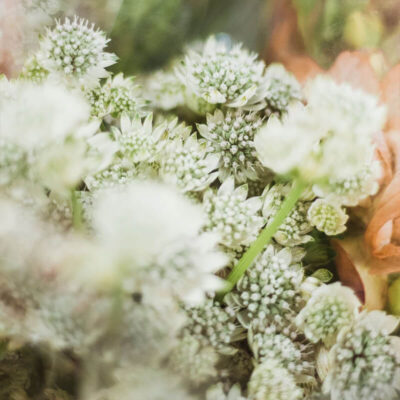 white astrantia Flower Delivery Vancouver