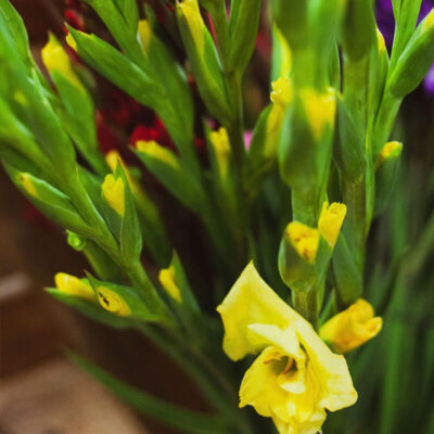 yellow gladiolas Flower Delivery Vancouver
