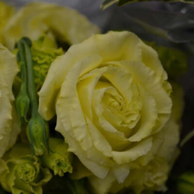 yellow lisianthus Flower Delivery Vancouver