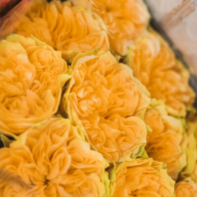 Yellow Roses Garden Flower Delivery