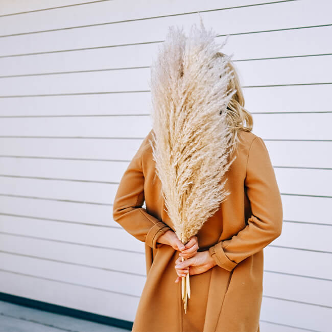 California Pampas Grass Flower Delivery Vancouver